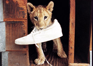 Saba Playing with a Shoe
